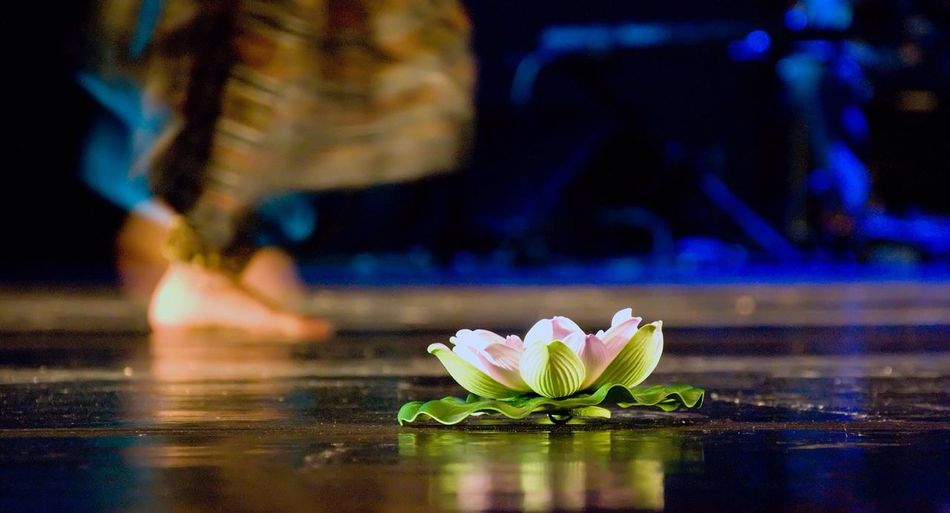 Close-Up Of Pink Water Lily With Dance Performer In Background