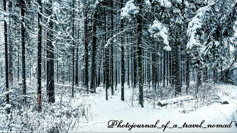 The White Forest ... Enchanting ... isn't it!!! Fresh Snowfall Snow Peaked Mountains Travelling Under Snowfall Melancholic Landscape Eyeem4photography - Strobist Enchanting Photography Enchanting Forest Digital Nomad The Purist (no Edit, No Filter) Eyeem4photography - Indian Attractions Traveller_india