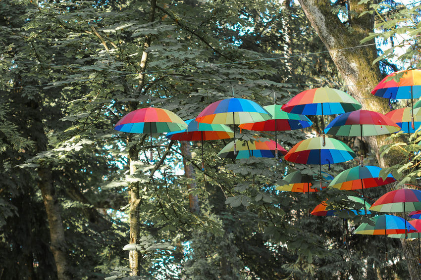 Beauty In Nature Branch Celebration City Cluj-Napoca Colorful Umbrella Colorful Umbrellas Day Growth Hanging Low Angle View Multi Colored Nature No People Outdoors Park Romania Tree Tree Umbrella Umbrella Revolution Umbrellas Place Of Heart