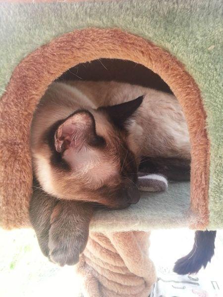 ( ³ω³ ).。O Cat♡ Cat Sleeping Cat