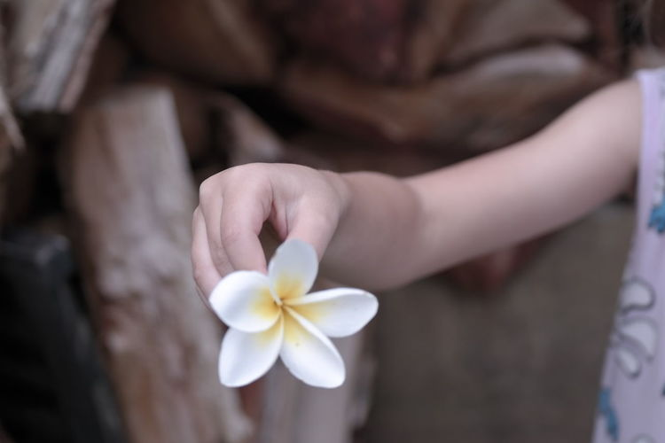 flower hand Flower Human Body Part Petal Human Hand One Person Fragility Frangipani Flower Head Holding Close-up Outdoors Young Adult