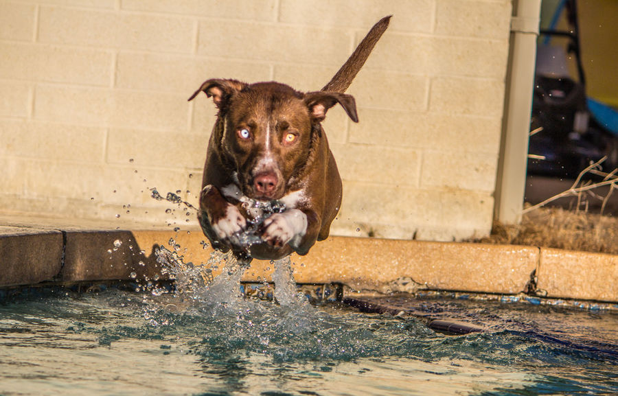 Animal Themes Day Dog Domestic Animals Mammal Motion No People One Animal Outdoors Pets Photography Water Wet
