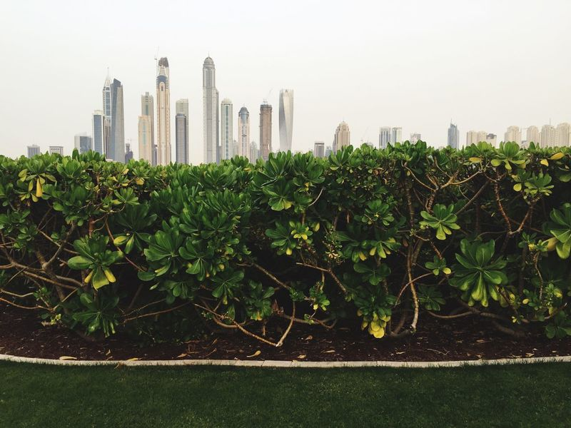Desert Sustainability Future Opposite City Green Nature Contrast