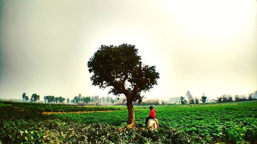 We're it all come to one tree and you... Tree Forbidden Outting Sky Wideangle Wider Green