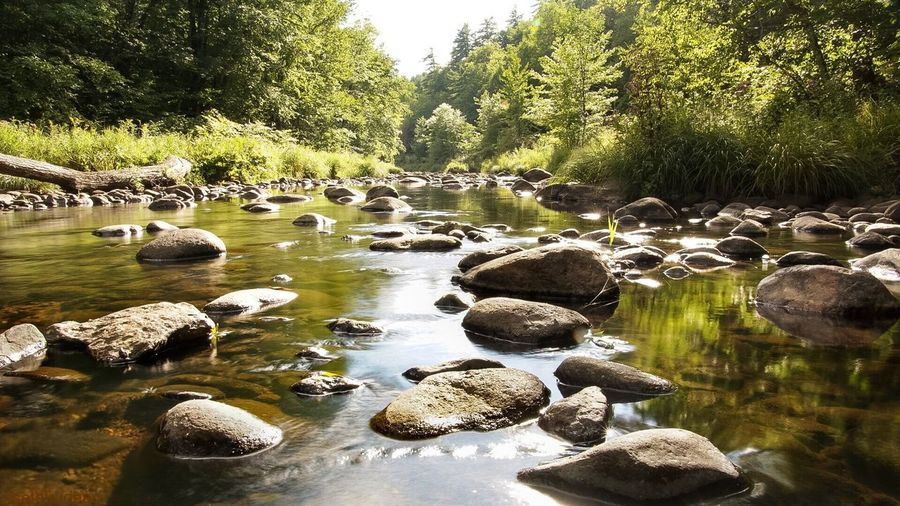Creek in New Hampshire Tree Water Forest Tranquil Scene Tranquility Stream Nature Rock - Object Stone - Object Beauty In Nature Scenics Non-urban Scene Flowing Stone Day River Travel Destinations Green Color Sethtrudeau Photography Creek New Hampshire Stream River Outdoors