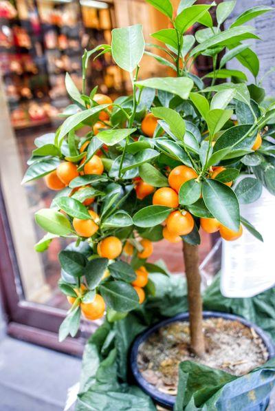 Leaf Citrus Fruit Freshness Close-up Growth Fruit No People Healthy Eating Plant Food Day Indoors  Nature Bonsai Orange Plant