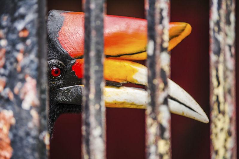 Close-up of rhinoceros hornbill seen through metals at zoo