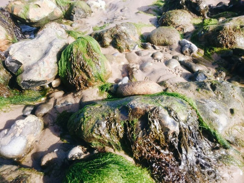 Rock - Object Water Non-urban Scene Nature Flowing Moss Stone - Object Beauty In Nature Tranquil Scene Rock Formation Day Outdoors Rock Seascape Cromer Beach Seaside Cromer Norfolk Uk Green Color Idyllic Nature Tranquility Scenics Tranquility