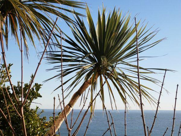 Palm Trees Taking Photos Seaside Photography