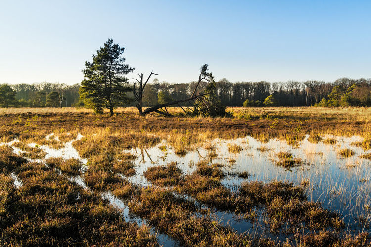 Beauty In Nature Clear Sky Day Field Grass Growth Landscape Leersumse Plassen Leersumse Veld Nature No People Outdoors Scenics Sky Tranquility Tree Water
