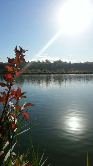 Nature Photography Fall Season South Saskatchewan River Fall Colors Fall Beauty Autumn 2015 Autumn Collection Autumn Colors Autumn🍁🍁🍁 EyeEm Best Shots - Autumn / Fall