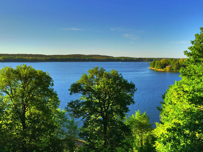 panorama in Sacrow Clear Sky Panorama Potsdam Scenic Trees Beauty In Nature Blue Clear Sky Day Green Color Idyllic Lake Lake View Nature No People Non-urban Scene Outdoors Sacrow Scenic View Sky Tranquil Scene Tranquility Tree Wannsee Water