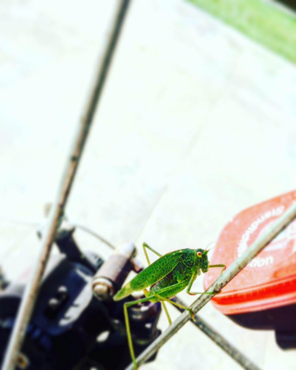 animal themes, one animal, insect, animals in the wild, close-up, no people, green color, animal wildlife, leaf, day, focus on foreground, outdoors, grasshopper, nature