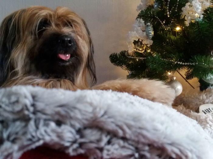 my dog Lootah