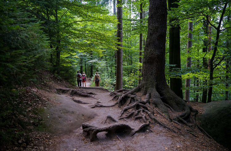 Baumwurzeln Wandergruppe Wanderweg Adult Beauty In Nature Day Forest Growth Land Leisure Activity Mammal Nature People Plant Real People Tree Tree Trunk Trunk Walking Women WoodLand