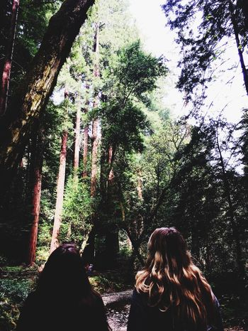 San Franciscisco] Muir Woods Travel Nature Wanderlust