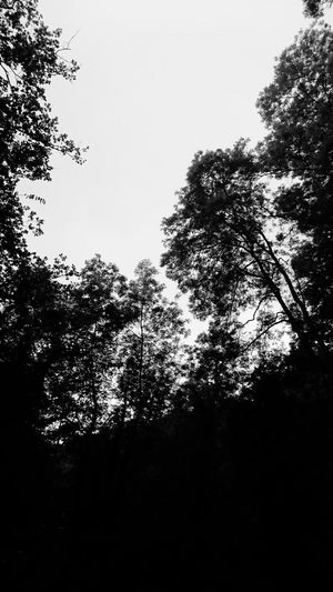 Nature Black And White Trees