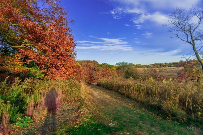 Tree Autumn Nature Change Beauty In Nature Scenics Landscape Sky Tranquility No People Outdoors The Way Forward Day Beauty In Nature Nature Landcape_collection Landscape_photography LongwoodGardens Environment Nature Photography Leaf Grass Growth