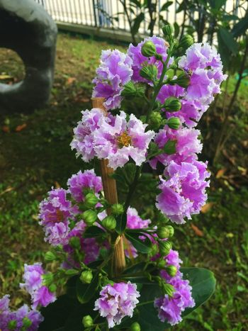 Gardening Beauty In Nature Blooming Close-up Day Flower Flower Head Flowers Garden Garden Photography Gerdening Growth Nature No People Outdoors Plant Purple Purple Flower