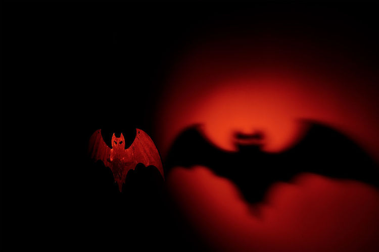 Bat Close-up Dark Extreme Close Up Focus On Foreground Halloween Human Finger Human Hair Red Selective Focus Silhouette