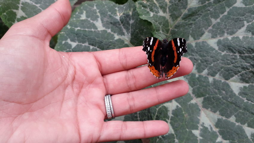 a butterfly in my hand 😍💗💖🦋🦋🦋 😚 Tunisia❤ Tunisia_with_love EyeEm EyeEm Best Shots - Nature EyeEm Best Shots EyeEmNewHere EyeEm Nature Lover EyeEm Selects Nail Polish Close-up Butterfly - Insect Animal Antenna Butterfly Wild Animal Animal Markings A New Beginning