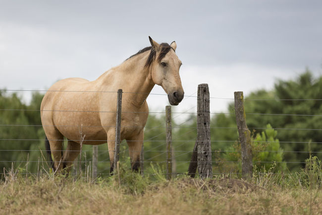 Peaceful Animal Animal Themes Beautiful Calm Calmness Fence Field Fine Art Fine Art Photography Focus On Foreground Grass Herbivorous Horizon Over Water Horse Landscape Mammal Nature No People Outdoors Rural Scene Scenic Scenics