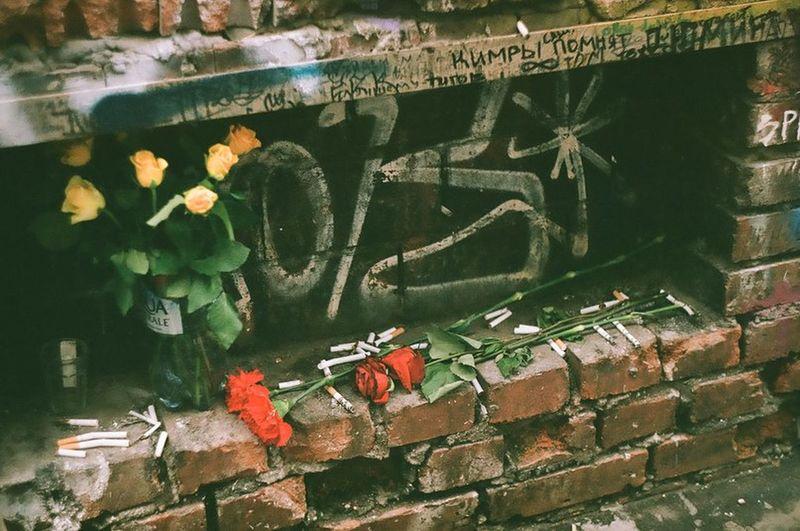 сигареты, розы, Цой. Flower Wall - Building Feature Graffiti Tsoi's Wall Rose🌹 Sigarette Sigarettes Arbat Street Old Arbat Wall стенацоя Стена Виктора Цоя розы сигарета сигареты