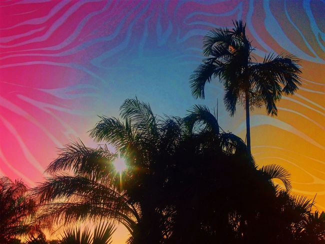 Psycho Rock Sunset. Palm Tree Palm Trees Trees Silhouette Copy Space Psycho Rock EyeEmNewHere Break The Mold Tropical Tropics Digitally Altered No People Outdoors Live For The Story LSD Lsd Trip 100 Days Of Summer Sommergefühle