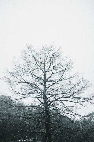 Bare Tree Beauty In Nature Branch Cold Temperature Day Low Angle View Nature No People Outdoors Sky Snow Tranquility Tree Tree Trunk Winter