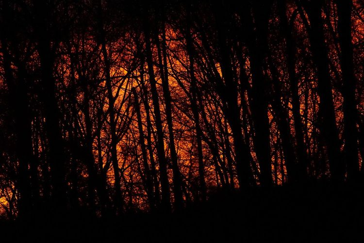 Capture The Moment fireinthesky GeeNiusPix fierysunset Heatinthefall Sunset Trees Celestialfire Theburn Presence Iam