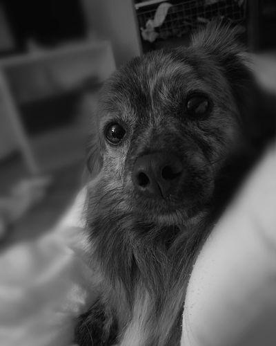 Un regard Adoptadog Amour ❤ Photooftheday Photography Photo Of The Day Leicaphotography Animal Photography Animal Doginstagram Animal Portrait Animal Family Leicap9
