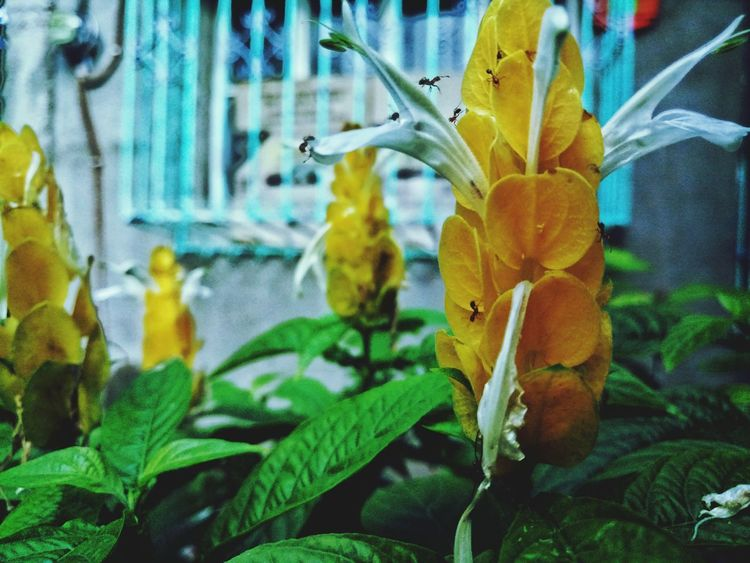 Ants Yellow Yellow Flower Plant Growth Nature No People Close-up Leaf Day Beauty In Nature Flower Freshness Outdoors