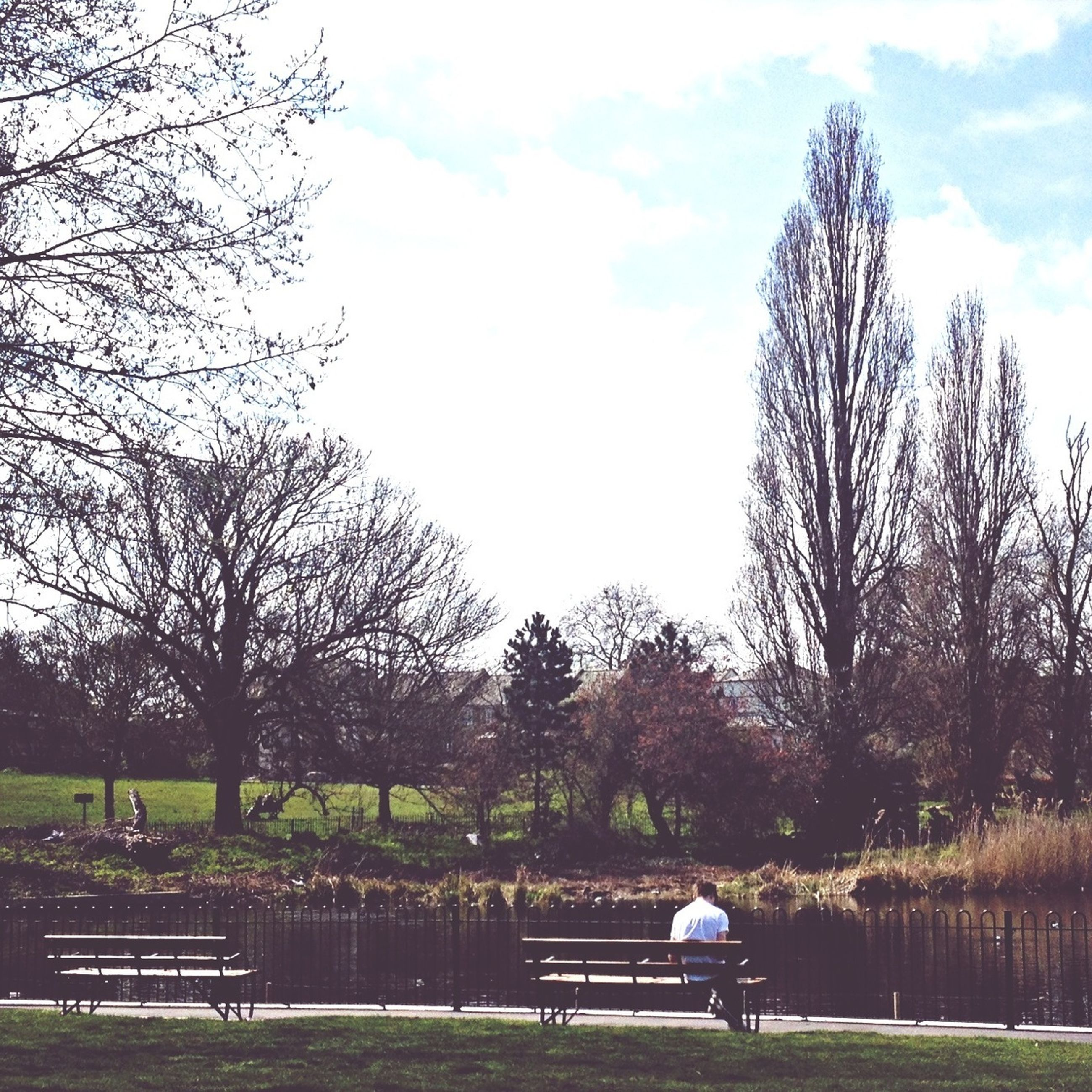 tree, bench, grass, sitting, relaxation, leisure activity, sky, lifestyles, lake, men, water, tranquility, park bench, park - man made space, tranquil scene, bare tree, nature, person
