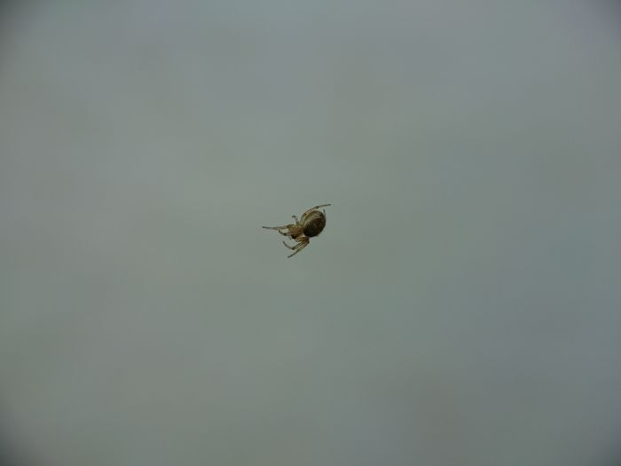 Close-up of fly flying over white background