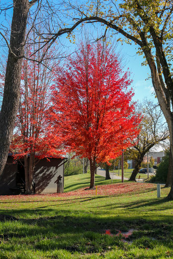 Fall Beauty Autumn Beauty In Nature Change Day Fall Colors😎 Growth Nature No People Outdoors Scenics Sky Tranquil Scene Tranquility Tree