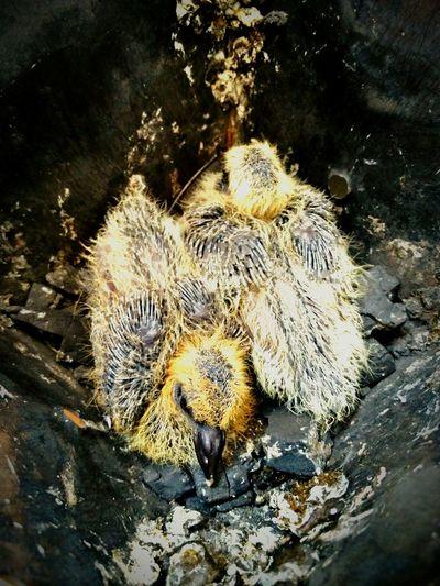 Close-up of dead bird