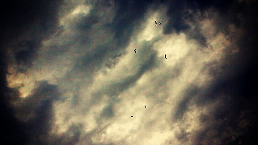 Sky Skyporn Artinsky Birds Flying High InTheSky Feeling Thankful Feelingfree😆 Skylover Naturelovers Skyisamazing Everythingisawesome Lovelovelove