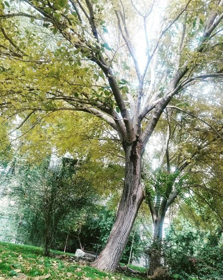 ©Rasool Kiani - Motaleb Kianizad Date: 2016-11-19 Loc: Isfahan Unuversity Of Technology - Isfahan - Iran Tree Nature Growth No People Beauty In Nature Green Color Backgrounds Outdoors Scenics Tranquility Day Branch Water Close-up Sky Freshness Willow Tree Irantravel Isfahan Iran Iranian Iran Street Photography Animal Themes Iranian People IranNature