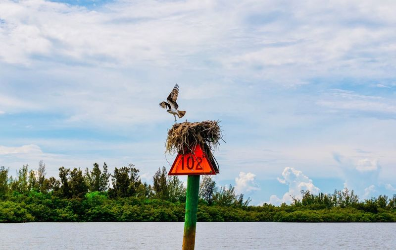Bird perching on a lake against sky
