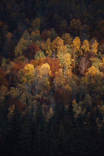 Full frame shot  of colorful trees in forest during autumn season at sunrise. copy space
