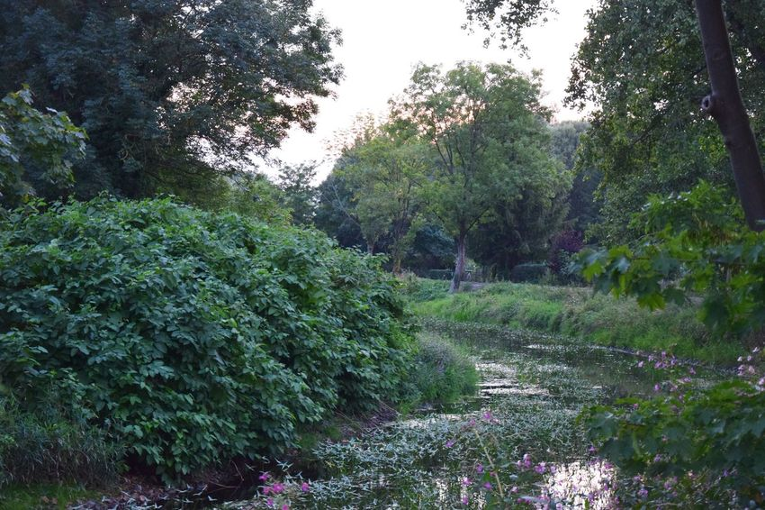 Evening Light Rhinluch Riverside Beauty In Nature Day Environment Evening Mood Flower Flowering Plant Forest Green Color Growth Land Landscape Nature Naturelovers No People Non-urban Scene Outdoors Plant River Scenics - Nature Tranquil Scene Tranquility Tree