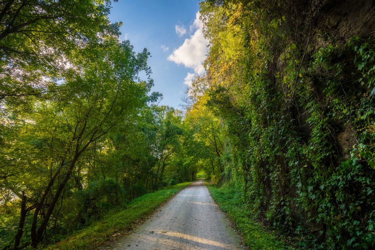 Beauty In Nature Cloud - Sky Day Diminishing Perspective Direction Forest Green Color Growth Land Nature No People Outdoors Plant Road Sky The Way Forward Tranquil Scene Tranquility Transportation Tree Treelined vanishing point