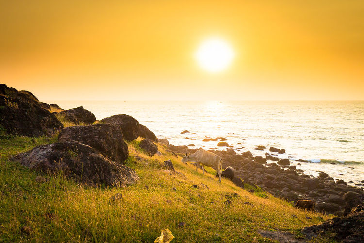 Beach Beauty In Nature Cliff Day Grass Horizon Horizon Over Water Landscape Nature No People Outdoors Rock - Object Scenics Sea Sky Summer Sun Sunlight Sunset Tranquil Scene Travel Destinations Vacations Water Wave