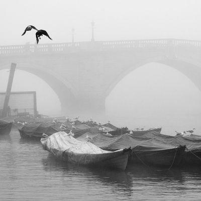 Birds Bridge Bw Calm Mist Nostalgia Reflection Seagulls Silence Tranquility