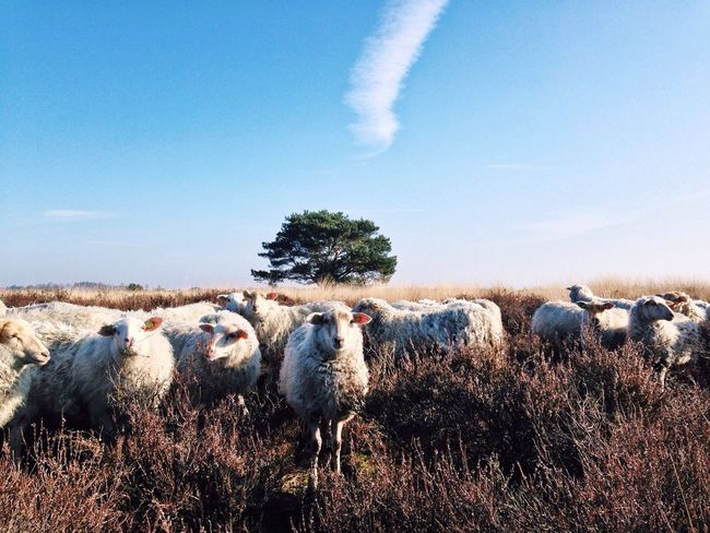 • Meeeh • IPhoneography Nature Impossible Moments The Environmentalist – 2014 EyeEm Awards