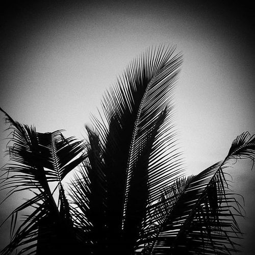 Grayscale Version Of Previous Pic Sunset Silhouette Perfect Color Retro Look Classic Feel Times Gone Beautiful Nice Pleasure