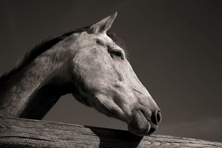 """Thinking"" by @olavcresp Horses Mamal Animal Blackandwhite Photography Equine Photography Horse Horse Photography  Portrait"