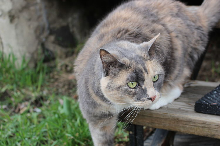 Misty! Mammal Animal Themes Animal Pets Domestic Feline Domestic Animals Vertebrate Cat Domestic Cat One Animal No People Focus On Foreground Whisker Young Animal Day Wood - Material Close-up Looking Kitten