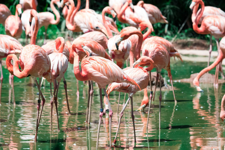 Close-up of flamingos standing in lake