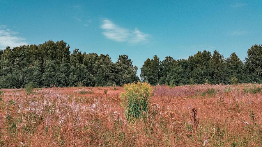 A meadow WoodLand Woods Meadow Single Cloud Wild Flowers Abandoned Rewilding Orange Color Summertime Turquoise Colored Tree Rural Scene Sky Cloud - Sky Flower Head Blooming Growing